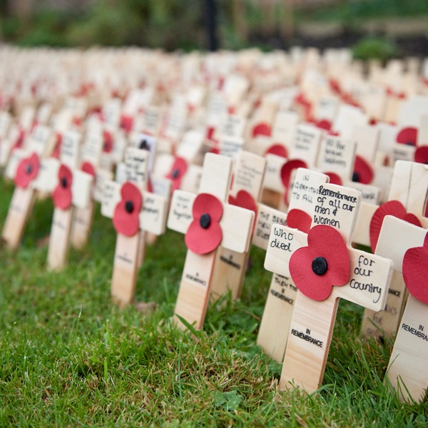 Crosses from the Lydiard Park Field of Remembrance