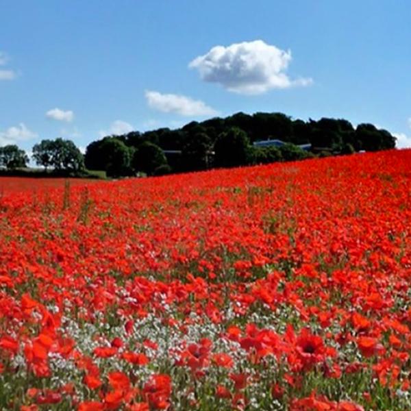 Act of Remembrance | Royal British Legion